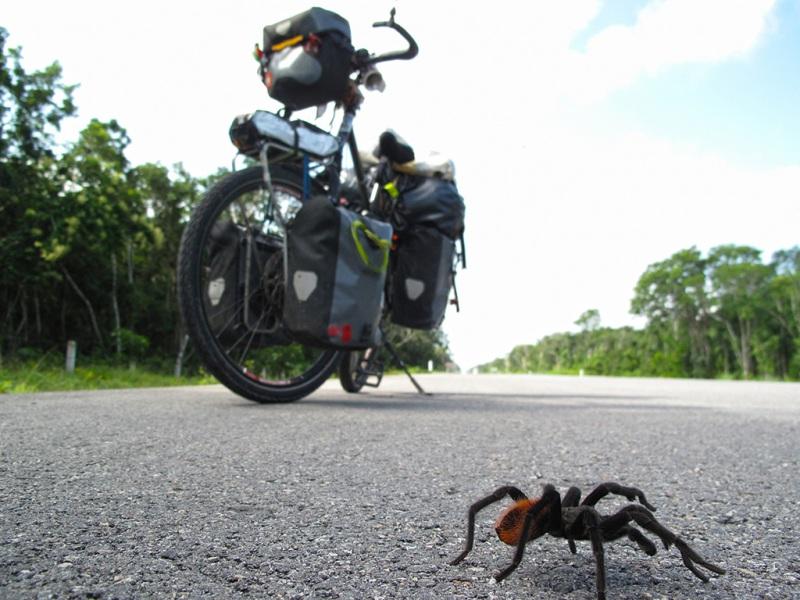 Road Encounter