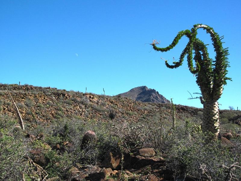 Sirio Cactus, Baja California