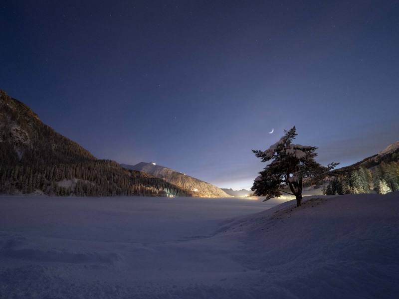 colorfish-martina-gees-night-tree-lake-davos