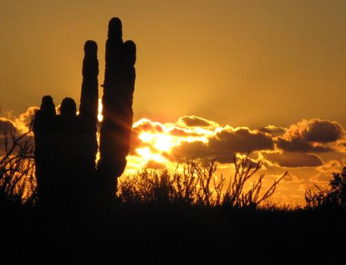 Mazatlán – Santa Rosalía, und täglich grüsst das Blasetier