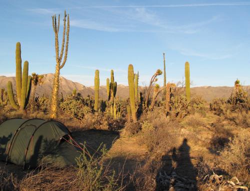 Santa Rosalía – San Felipe; Coco, Gringos und die Wüste