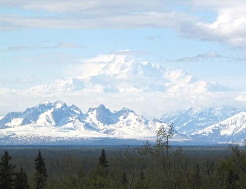 Anchorage – Denali National Park – Homer; ewige Tage, der Denali und viel Wildlife