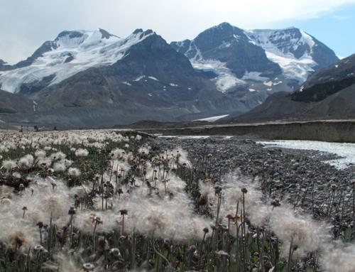 Prince George – Banff, mit zwei Clowns und ohne Wild Permit durch die kanadischen Rockies