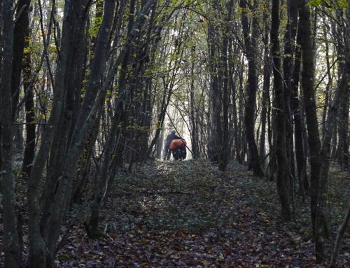 Montpellier – Mahlberg, der kalte Vorendspurt