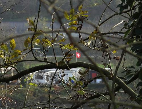 Mahlberg – Opfikon, ein etwas unerwartetes Ende