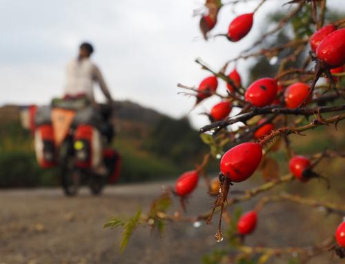 Coyhaique – Chile Chico; unterwegs auf der herbstlichen Carretera Austral